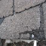 damaged shingles